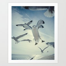 Seagull {Four} Art Print