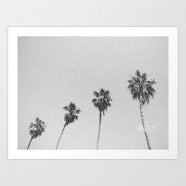 PALM TREES IV / San Francisco, California Art Print
