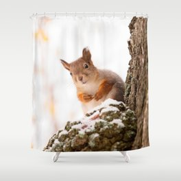 Squirrel in first snow #decor #buyart #society6 Shower Curtain