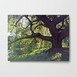 Weeping Blue Atlas Cedar Metal Print