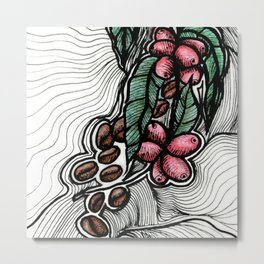 Coffee: from flower to toasted grain doodle (2) Metal Print