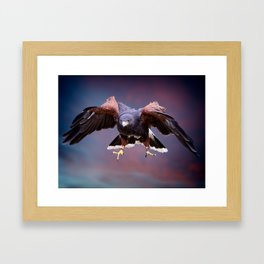 Falconry in action Framed Art Print