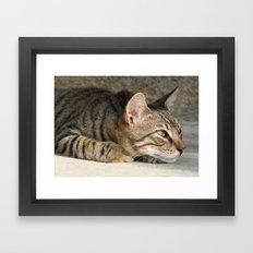 Thoughtful Tabby Cat Framed Art Print