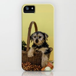 Hooper the Yorkie in his Thanksgiving Basket iPhone Case