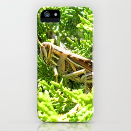Watercolor Grasshopper, American Bird Grasshopper 01, Janes Island, Maryland iPhone Case