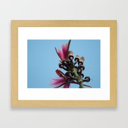 Coquitos in Bloom Framed Art Print