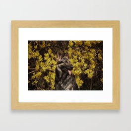Shepherds love the spring Framed Art Print