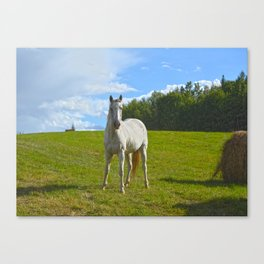 The Stance Canvas Print