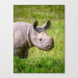 Baby Black Rhino. Canvas Print