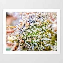 Diamond OG Kush Strain Top Shelf Indoor Hydro Trichomes Close Up View Art Print