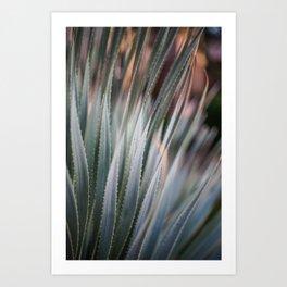 Arizona Agave Art Print