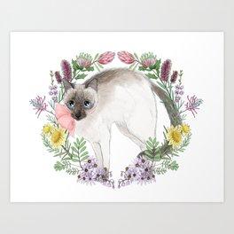 Pixie the Chocolate Siamese Cat Art Print