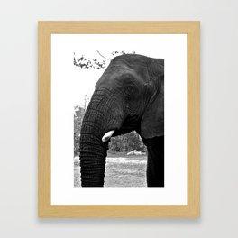 Grand Elephant- Two Framed Art Print
