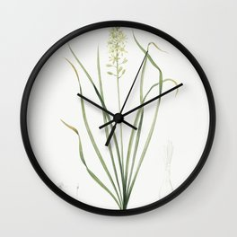 Grass leaved iris  from Les liliacees (1805) by Pierre Joseph Redoute (1759-1840) Wall Clock