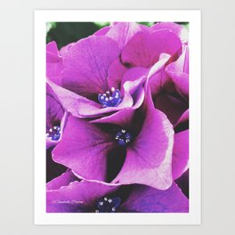 Purple Beauty Art Print