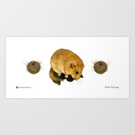 Hazel Dormouse - Summer Art Print