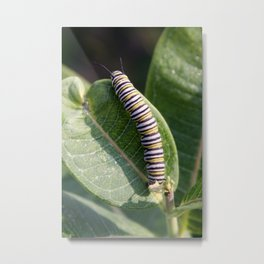 Monarch Caterpillar Metal Print