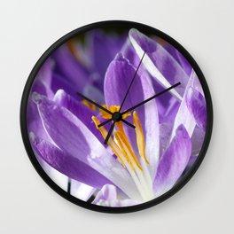 Violet spring crocus Wall Clock