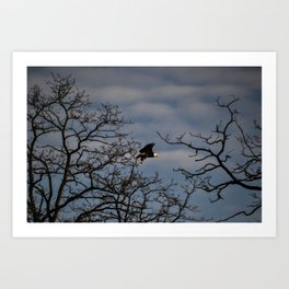Bald Eagle Lift-off Art Print