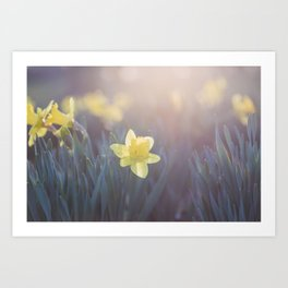 Time for Daffodils Art Print