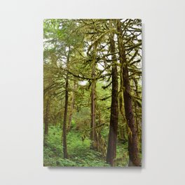 Alaska Tongass National Forest, Rainforest, Tall Trees, Scenic Forest, Forest Scenery Metal Print