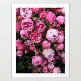 Victorian Roses Art Print