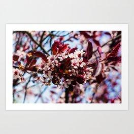 Springtime is here! Art Print