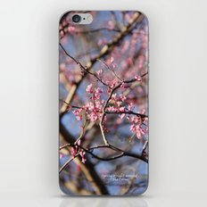 Spring is right around the Corner iPhone & iPod Skin