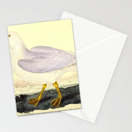 Glaucous Gull larus glaucus10 Stationery Cards
