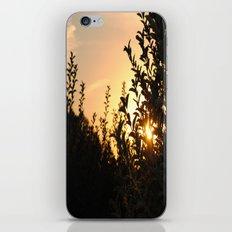 Apple Orchard at Sunset iPhone & iPod Skin