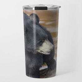 Black Bear (Ursus americans) near water Travel Mug