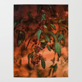 Red Berry Tree at Sunset Poster