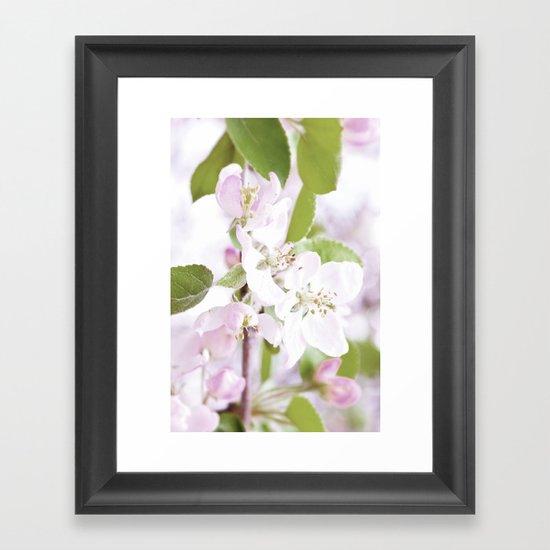Apple Tree Blossoms Framed Art Print