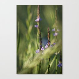 Welcome to Spring!! Canvas Print