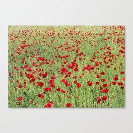 A Pasture Of Red Poppies and Remembrance Canvas Print