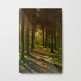 A Walk in the Woods Scenic Photography. Metal Print