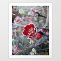 Flower in Frost Art Print