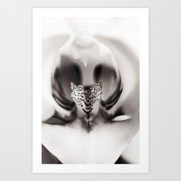 Orchid Closeup Art Print