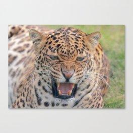 Leopard Fierce Canvas Print