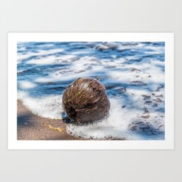Coconut in Sea-foam II Art Print
