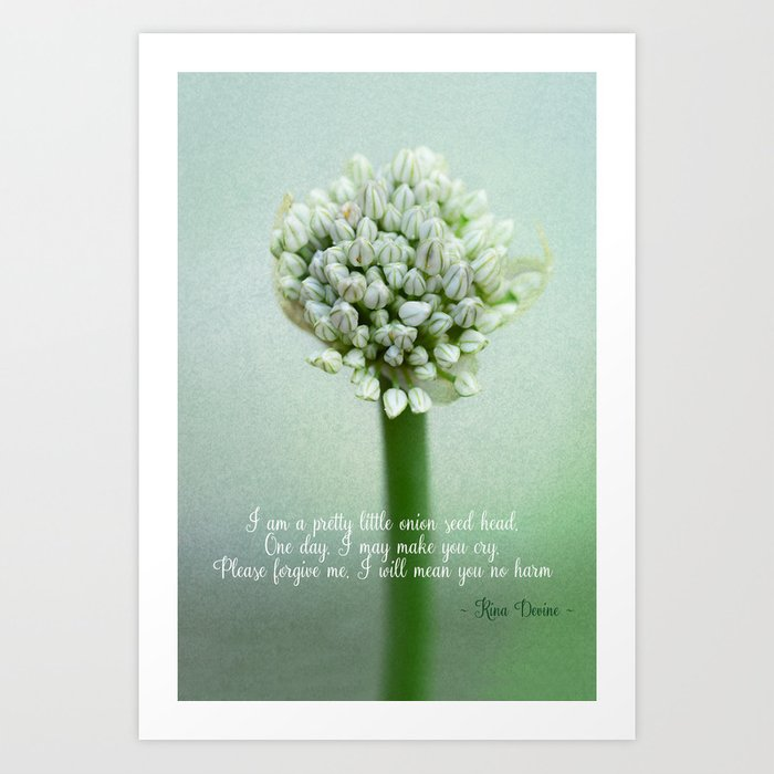 Onion Seed Head Art Print