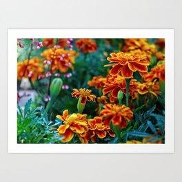 Marigolds in Garden Art Print