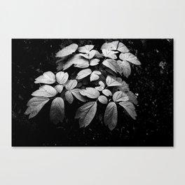 Monochrome Droplet Canvas Print