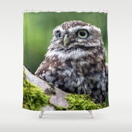 owl in green Shower Curtain