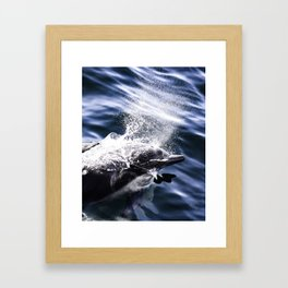 Common Dolphin Framed Art Print