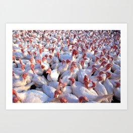 Turkey Farm  Art Print