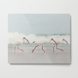 Three Little Ibis All in a Row Metal Print