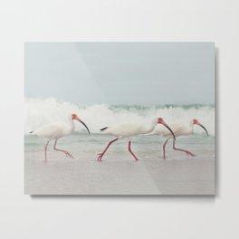 Three Little Ibis All in a Row Metal Print
