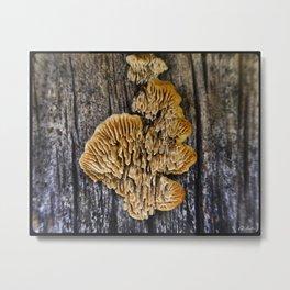 Spores on Wood #1 Metal Print