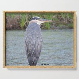 Blue Heron at Hillsboro Pond Serving Tray